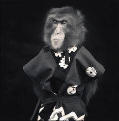 No monkeying around with Hiroshi Watanabe's new photo series