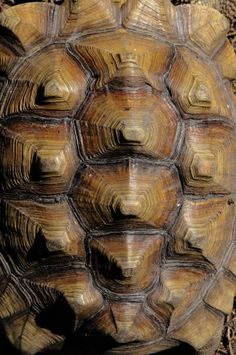Turtle shells can be repetitive because even though if you look too close the shapes all look the same and the texture looks the same and the colours