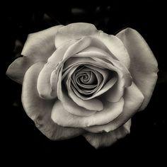 Flower Photograph Rose Nature Fine Art Black and White Photography Monochrome Flower Wall Art Wall Decor Home Decor Gardening Gift