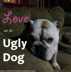 Love and the Ugly Dog.  You don't always get to choose the animals you are asked to take care of. When I got married, my husband brought into my world an old, smelly dog. This is our story ...