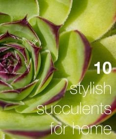 Succulent School: 10 Hardy & Stylish Succulents For Home