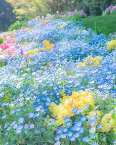 57 ideas for nature flowers spring gardens Purple Flowers, Wild Flowers, Beautiful Flowers, Illustration Blume, Flower Aesthetic, Flower Pictures, Dream Garden, Belle Photo, Spring Flowers
