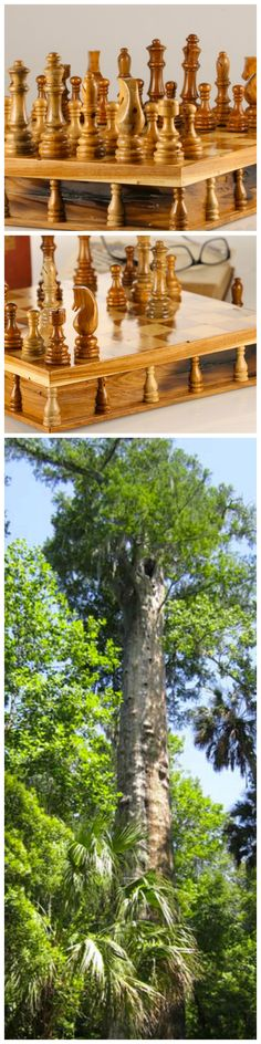 This Chess Set was hand crafted from a 3500 year old U.S. National Historic Landmark tree that unfortunately burnt down in 2012.  It had been dedicated in 1927 by U.S. President Calvin Coolidge. The wood is now preserved in this and another chess set.  More photos: http://www.chesshouse.com/3500-Year-Old-Senator-Tree-Preserved-in-Chess-Set-a/387.htm#.VkETIaJLRv1