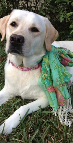 puppies love lilly too!