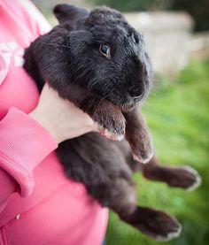 Toby the giant rabbit