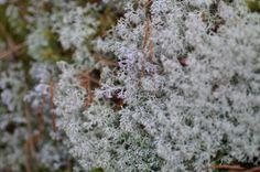raindeer lichen National Museum, National Parks, Small Groups, Finland, Modern Art, Tours, Nature, Travel, Naturaleza