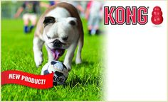KONG Sport Balls are better than a tennis ball. Get a deal on doggyloot.com Animal Rescue Site, Dog Chews, Animal Shelter, Fur Babies, Balls, Pup, Tennis, Sport, Dogs
