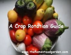 A Crop Rotation Guide - easy and comprehensive with fertilizing tips. #organic #gardening