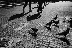 Photo L, Top Photo, Cool Photos, Sidewalk, Shades, Birds, World, Photography, Photograph