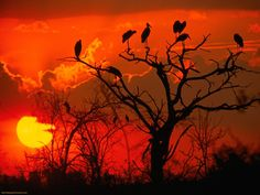 photos of africa | Download Nature Scenes wallpaper, 'Botswana Sunset Africa'.