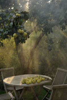 Gardening Autumn - The apple orchard. - With the arrival of rains and falling temperatures autumn is a perfect opportunity to make new plantations Country Life, Country Living, Country Roads, Nature Aesthetic, Apple Tree, Farm Life, Aesthetic Pictures, Beautiful Places, Beautiful Pictures