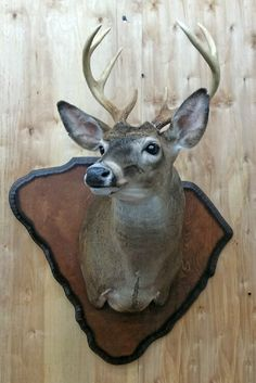 Taxidermy, Moose Art, Awesome, Animals, Ideas, Animaux, Be Awesome, Animal, Animales