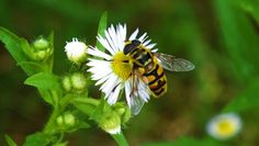 tsū is a free social network and payment platform that shares up to 90% of revenues with its users.You can register here : tsu.co/iammiky #tsu #tsū #social #network #users #free #friends #originalcontent #bee #garden #nature