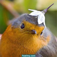 Silly bird, that's not a hat