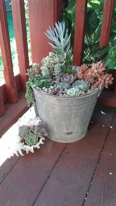 An old mop bucket or a seashell...succulents look good in anything!