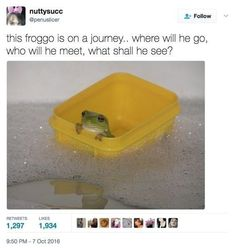 Frog Pictures, Cute Pictures, Daily Pictures, Cute Funny Animals, Funny Cute, Hilarious, Your Smile, Make You Smile, Cat Memes