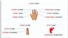 Le corps humain en espagnol - La mano, La main, Los dedos, Les doigts, El índice, L'index, El pulgar, Le pouce, El dedo corazón, Le majeur, El anular, L'annulaire, el dedo meñique, L'auriculaire, Un dedo, Un doigt, Un Pie, Un pied, Una uña, Un ongle, Una falange, Une phalange, Un dedo de pie, Un doigt de pied Map, Education, Fingers, Vocabulary, Salud, Spanish Vocabulary, Spanish English, The Body, Spanish Alphabet