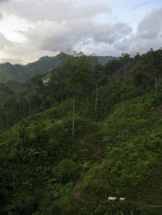 The view out across the forest from the village of San Rafael.