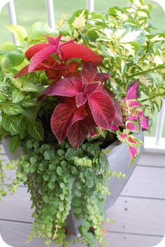 33 Shades of Green: Container Gardening.  Pink and Green color palette for plants in pot.