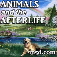 More and more often, while channelling, psychics meet the spirits of departed animals who had been dearly loved by their clients.