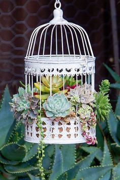 and Admire These Charming Succulent Birdcages — Then DIY Them! Stop and Admire These Charming Succulent Birdcages — Then DIY Them!Bird cage (disambiguation) A birdcage is a cage for birds. Bird cage or variants may also refer to: Succulents In Containers, Cacti And Succulents, Container Plants, Planting Succulents, Container Gardening, Cactus Plants, Succulents Drawing, Air Plants, Succulent Centerpieces