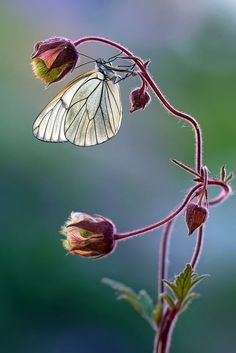 """Next theme: """"butterfly cottage"""" Types Of Butterflies, Beautiful Butterflies, Beautiful Flowers, Butterfly Pictures, Butterfly Flowers, Bee Flower, Art Papillon, Art Et Nature, Bugs And Insects"""