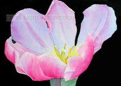 pink tulip watercolor flower painting archival print by carolsapp, $15.00