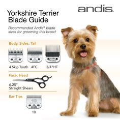 Clipper blades for grooming the Yorkshire Terrier. Hope this helps! Happy groomi… Clipper blades for grooming the Yorkshire Terrier. Hope this helps! Grooming Yorkies, Dog Grooming Styles, Dog Grooming Tips, Grooming Salon, Pet Tips, Yorkshire Terrier Haircut, Yorkshire Terrier Puppies, Yorkie Cuts, Yorkie Haircuts
