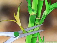 Image titled Take Care of Lucky Bamboo Step 10