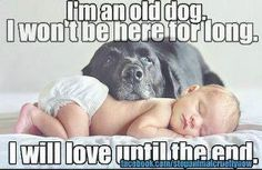 This is why I want to adopt old dogs.