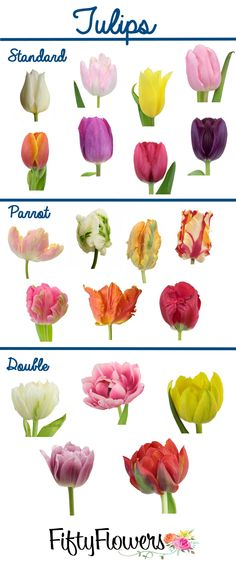 FiftyFlowers.com offers a wide variety of types and colors of fresh  wholesale Tulips! Click through to pick your favorite.