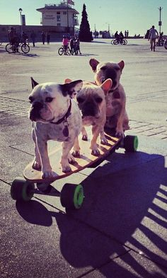 Dogs on a skateboard! Only in Hermosa Beach