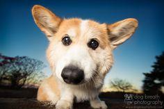 Photo Harriett the Bobblehead by Kaylee Greer on 500px
