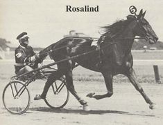 """The """"gift filly"""" -- ROSALIND and BEN WHITE."""