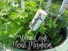 Wine cork herb markers: Great idea for wine loving gardeners!