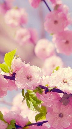 Blossoms in the spring. Bilden påminner mig om hur den helt otroligt rörande dramaserien, Torka aldrig tårar utan hanskar slutade.