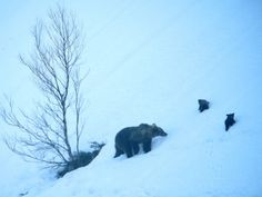 Osa con crías en invierno (Foto: FOP)