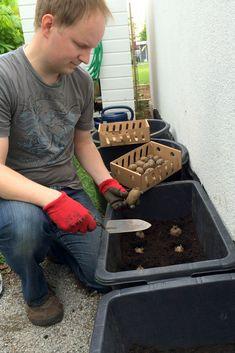 Kartoffeln in Kübeln: Die Kübel aus dem Baumarkt werden auf dem Boden mehrmals durchbohrt, damit das Gieß- bzw. Regenwasser abfließen kann. Eine Drainageschicht aus Blähton ist zusätzlich empfehlenswert | Ländchenlust