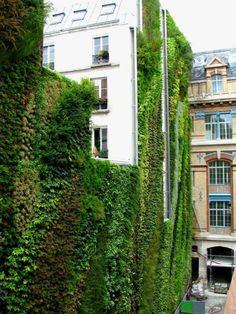 vihreä seinä