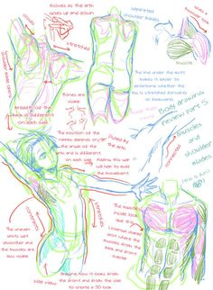 """losthitsu: """" Body drawing review - translated version. """""""