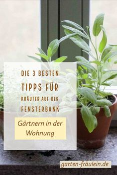 Kräuter auf der Fensterbank In winter, it is a real challenge to keep the herbs on the windowsill fresh, healthy and crispy in the long term. Off to the indoor garden! Balcony Plants, Indoor Plants, Amazing Gardens, Beautiful Gardens, Hydrangea Seeds, Diy Projects For Beginners, Diy Chicken Coop, Herbs Indoors, Real Plants