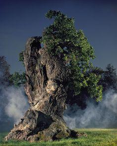 Solitario árbol @@