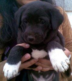 Cute pariah pup!