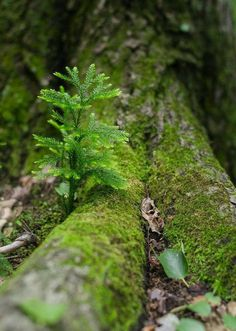 WOODLANDS - We're so focused on capturing dramatic landscapes that sometimes we often forget about the little things Moss Garden, Tree Forest, Woodland Forest, Walk In The Woods, Belle Photo, Nature Photos, Natural World, Amazing Nature, Mother Earth