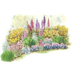 A Bold Cottage Garden  Add interest and drama to your yard with this eye-catching, long-blooming garden plan. Garden size: 20 by 10 feet.