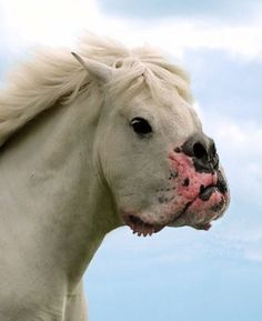 The Most Weird And Scary Photoshopped Hybrid Animals You'll Ever See • Page 3 of 6 • BoredBug