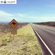 I've always talked about taking my baby to great ocean road even a week before he past away... ... #GreatOceanRoad  #Repost @rexcat75  Road trip. Great Ocean Road #Victoria #Australia. @lonelyplanet #lonelyplanet #roadtrip #Oz #DownUnder #roos #kangaroos #sign #ocean #travel #travelgram #instadaily #instatravel #instagood #summer #south by irenee999