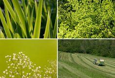 Grüne in der Natur. Fotografien in grüner Farbe.  green colors in  nature.