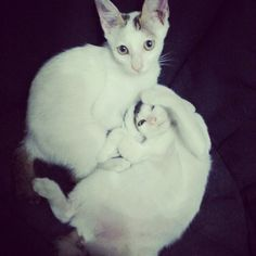 My lovely cat #mimi and mumu