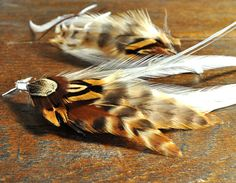 Love brown colored feathers